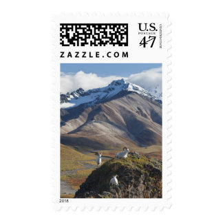 Dall sheep rams perch on a cliff stamp