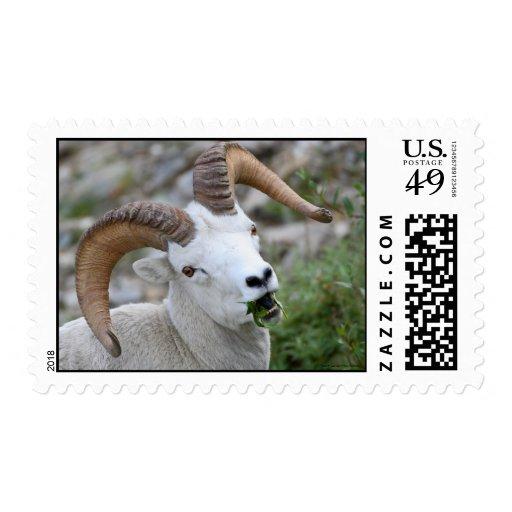 Dall Sheep Stamp