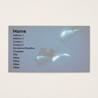 Dall's porpoise business card