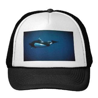 Dall's porpoise mesh hats