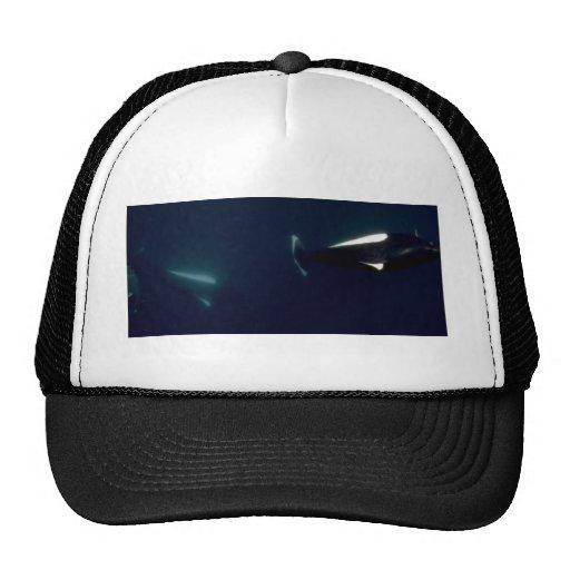 Dall's porpoise trucker hat