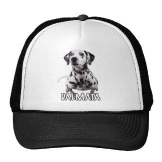 dalmata the mascot 01 hat