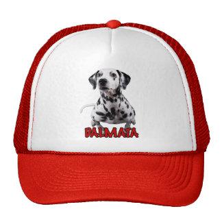 dalmata the mascot 02 hat