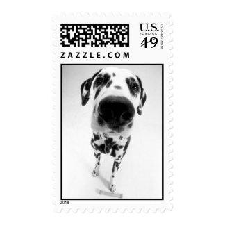 Dalmatian_1 Stamps