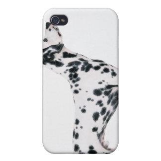 Dalmatian 3 iPhone 4/4S funda