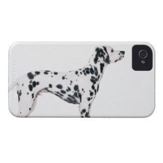 Dalmatian 3 iPhone 4 Case-Mate cárcasas