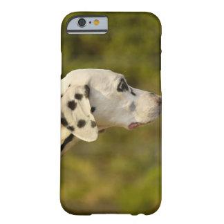 Dalmatian 4 funda de iPhone 6 barely there