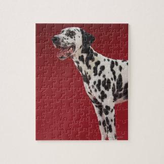 Dalmatian 6 puzzle