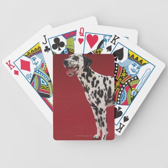 Dalmatian Bicycle Playing Cards