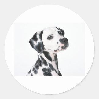 Dalmatian Classic Round Sticker
