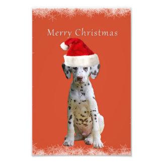 Dalmatian con el gorra del navidad impresión fotográfica