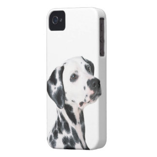 Dalmatian dog beautiful photo, gift iPhone 4 cover