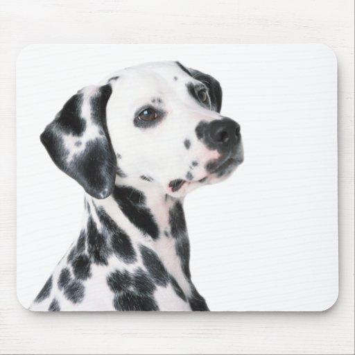 Dalmatian dog beautiful photo, gift mousepads