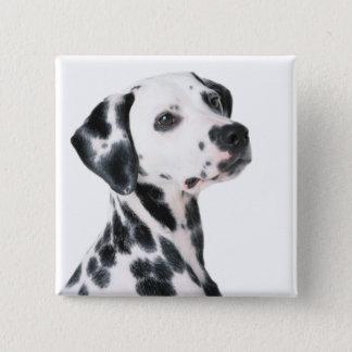 Dalmatian dog beautiful photo, gift pinback button
