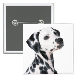 Dalmatian dog beautiful photo, gift pinback button