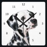 "Dalmatian dog beautiful photo square wall clock<br><div class=""desc"">Beautiful photo of a dalmatian,  dalmation dog portrait wall clock.  great gift idea for dog lovers</div>"