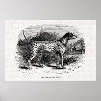 Dalmatian Dog - Dalmatians and Dogs Template Poster