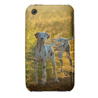 Dalmatian Dogs iPhone 3G/3GS Barely There Case