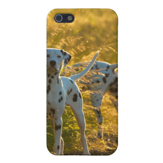 Dalmatian Dogs iPhone 4/4S Case