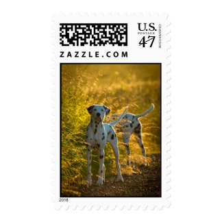 Dalmatian Dogs Postage Stamp