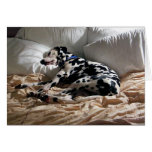 Dalmatian durmiente felicitación