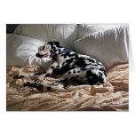 Dalmatian durmiente tarjeta de felicitación