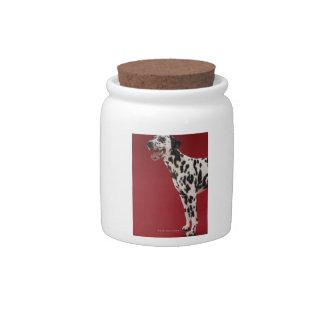 Dalmatian Jarras Para Caramelos