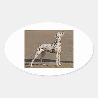 dalmatian-full.png oval sticker