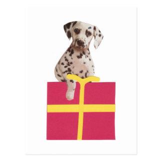 Dalmatian Gift Box Post Cards