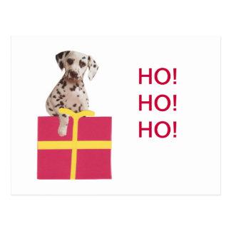 Dalmatian Gift Box Postcard