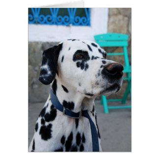 Dalmatian Greeting Card
