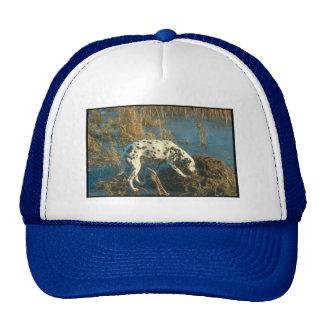 Dalmatian Mesh Hat