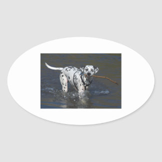 dalmatian-in water.png oval sticker