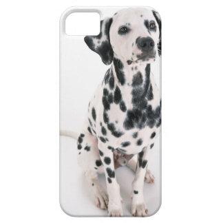 Dalmatian iPhone 5 Fundas