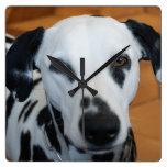 Dalmatian lindo reloj de pared