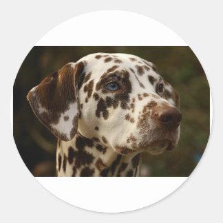 dalmatian-liver.png classic round sticker