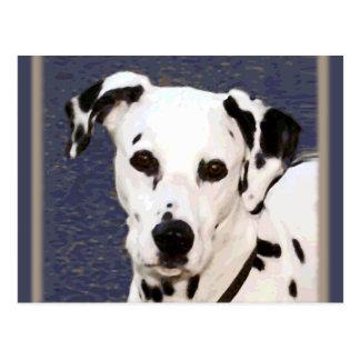 "Dalmatian ""Mayday"" ~ Postcard"