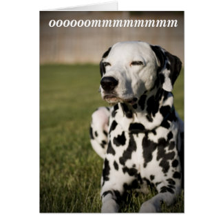Dalmatian Meditation Card