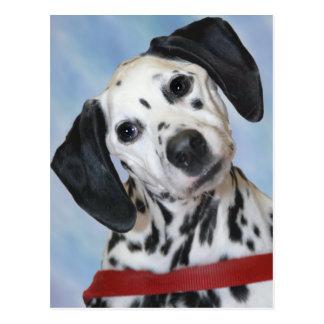 Dalmatian Photo Post Card