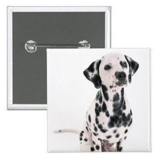 Dalmatian Pin Cuadrada 5 Cm