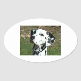 dalmatian.png oval sticker