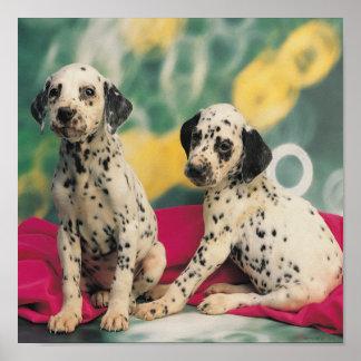 Dalmatian Puppies Print