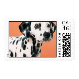 Dalmatian Puppies Stamp