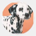 Dalmatian Puppies Stickers