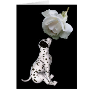Dalmatian Puppy And White Rose Card