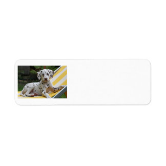 Dalmatian puppy dog address labels