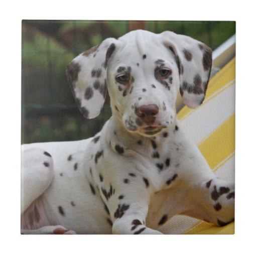 Dalmatian puppy dog beautiful tile or trivet