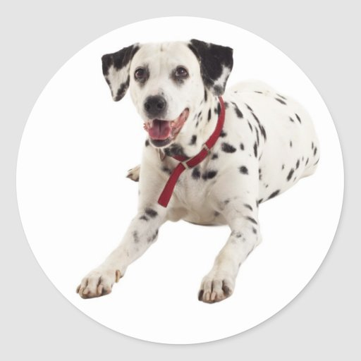 Dalmatian Puppy Dog Greeting Stickers / Labels