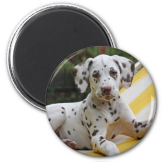 Dalmatian puppy dog magnet, gift idea 2 inch round magnet