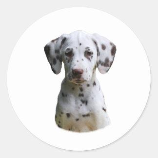 Dalmatian puppy dog photo classic round sticker